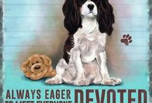 Cavalier King Charles Spaniel ideas
