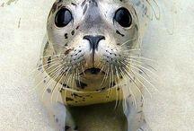 Art and Seal / Animals related to the sea / Zeeleven anders dan vis maar dan wel met viseters. Maar dan ook weer met eters van viseters.