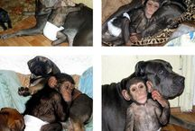Animal Obsession xo
