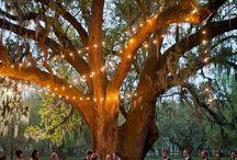 DeWayne & Erins wedding ideas