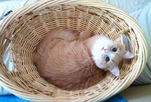 Percival / Just Percival my cat. ❤️