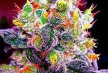 Medicine from Heaven