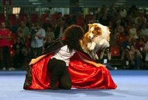 Figaro the dancing dog