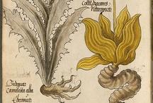 Herbier botanique