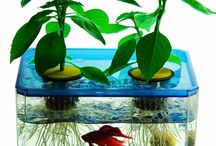 vissekomweetjes