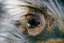 Portfólio de fotografia - Animais e vida selvagem by Osvaldo Furiatto