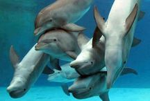 Dolphins / by Catherine Seiler