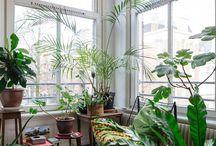 Veranda et terrasse