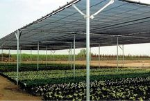 SHADEHOUSES / The placement of a very thin screen reduces the entrance of pests and diseases and also creates a drop in pressure of the air passing through the screen which reduces plant transpiration. The physical exclusion of the insects from the greenhouse reduces the incidence of direct crop damage and also of insect-transmitted virus diseases. There is also an independent roof layer of polyethylene film which keeps the rains out, while allowing maximum passive ventilation.
