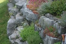 Stone wall / Flowers in stone wall