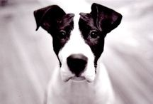 Awesome dogs / Pictures of magnificent creatures