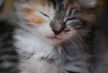 cats♥♥♥ / by Jessica Tavaglione