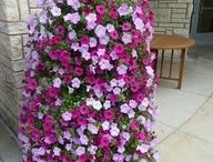 Petunia tower / Flowers