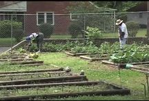 Community Gardens / A Board to gather information about starting or participating in a community garden