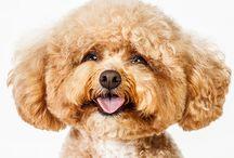 Pets...doggies / by Joyce Caradine