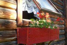 My Cabin in the Woods / by Diana Krasnyuk