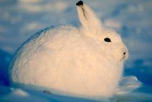 Coelhos / Coelhos, bunny
