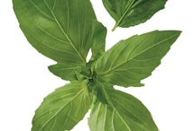 Fresh Herbs / All Farm Fresh Herbs we offer, right out of New York.