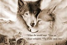 "2 wolves (the one you feed) / There is a battle between two ""wolves"" inside us all. One is Evil.  It is anger, envy, jealousy, sorrow, regret, greed, arrogance, self-pity, guilt, resentment, inferiority, lies, false pride, superiority, and ego. The other is Good.  It is joy, peace, love, hope, serenity, humility, kindness, benevolence, empathy, generosity, truth, compassion and faith."" Which wolf wins?  ""The one you feed."""