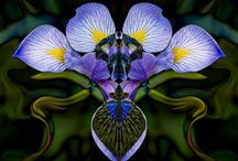 ~ iris ~ / ~ thou are the Iris ~ fair among the fairest ~  who, armed with golden rod ~   and winged with the celestial azure, bearest ~   the message of some god ~~ (henry wadsworth longfellow) ~  / by Jewel Tillotson