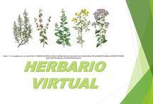 HERBARIO VIRTUAL / HIERBAS