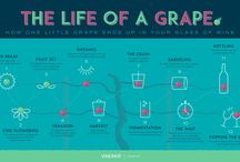 Interesting Facts / Interesting Facts about Winemaking
