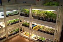 Greenhouse Oasis