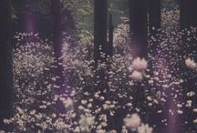 dreamy ✨