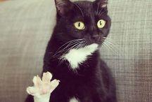 Animal / miao~
