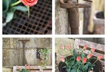 Yard Ideas / by Linda Koehler