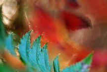 Autumn turquoises / by Dragica Juzbasic