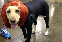 Cosplay by Dogs / Dog Cosplayers
