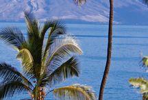 Palmy a exoticke stromy