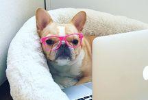 The witty dog / 100% Organic Bio dog food > witty dogs