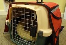 Emergency Pet Kits