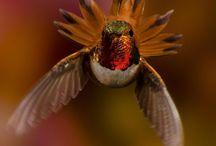 Birds / by Liza Lewter