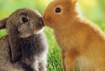 Konijnen / Voor de echte konijn liefhebbers