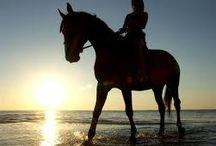 """Horses/Konie :*** / Konie: Piękne zwierzęta, cudowni przyjaciele, najlepsi towarzysze życia, pasje, zwierzaki, których nie da się opuścić. Moja największa pasja. Kocham te zwierzęta i jazdę konną.  ,,Żadna godzina życia nie została zmarnowana, gdy spędziło się ją w siodle"""" ,,Chcesz spojrzeć koniowi w oczy? Najpierw spójrz mu w serce. ,,To uszy, które wysłuchają. Oczy, które cieszą się na Twój widok. Kopyta, które gonią drogę do szczęścia."""" ,,Konie nie zapominają, ale wybaczają. Ludzie zapominają, ale nie wybaczają"""""""