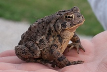 [ project ] a TOAD tale / by Jamie Adjemian