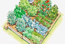 Veggie and Fruit Gardening