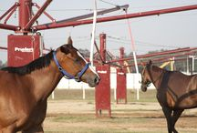 Priefert Horse Walkers / Don't let the frustrations that come with a fat, lazy horse, a hyperactive horse, or an injured horse hinder the enjoyment of your hobby. All of these things can be minimized by simply introducing an effective, consistent exercise program in a Priefert Walker. Visit Priefert.com for more.  / by Priefert MFG