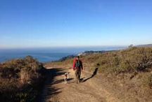 Outdoors & Hiking / Dog friendly outings