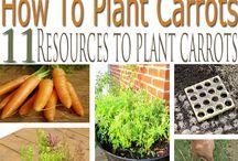 Gardening / Gardening Tips and Tricks.