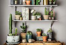 Växter i hemmet