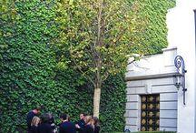Pareti verdi vertical garden