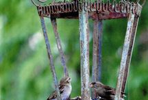 Bird Feeders / Bird feeders you can make from everyday materials