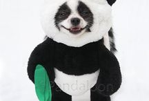 Panda Puppy Dog Costume with Arms / The cutest panda dog costume by Pandaloon