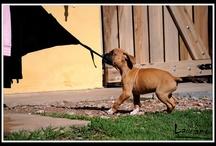 :) aaa / Boxer