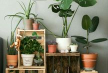 Plants & shelves
