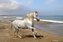 Paarden van de zon